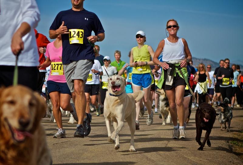 Yuba Dog Run