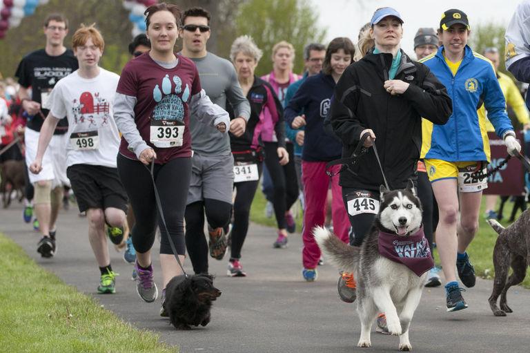 dog run photo