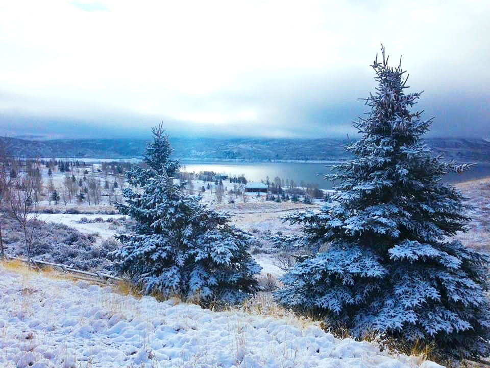 JordanTrees Snow2