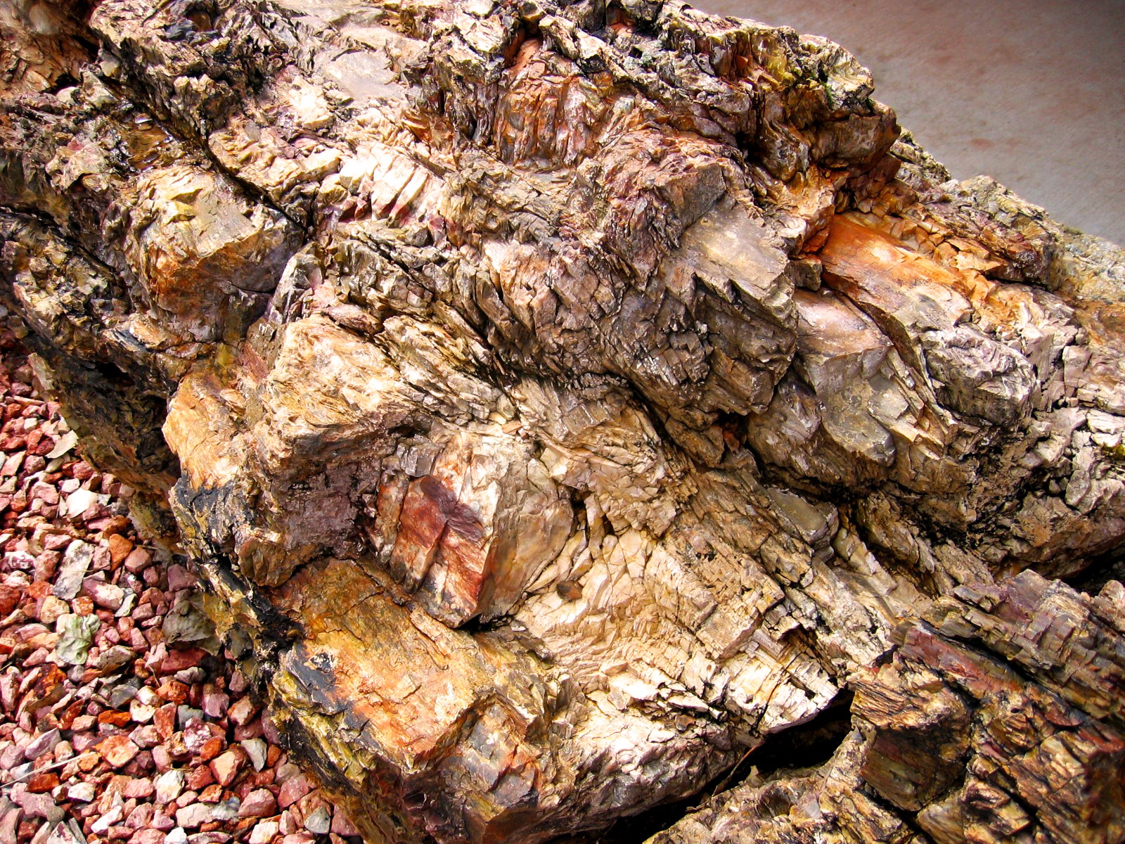 Petrified wood can be found spread throughout the whole park.