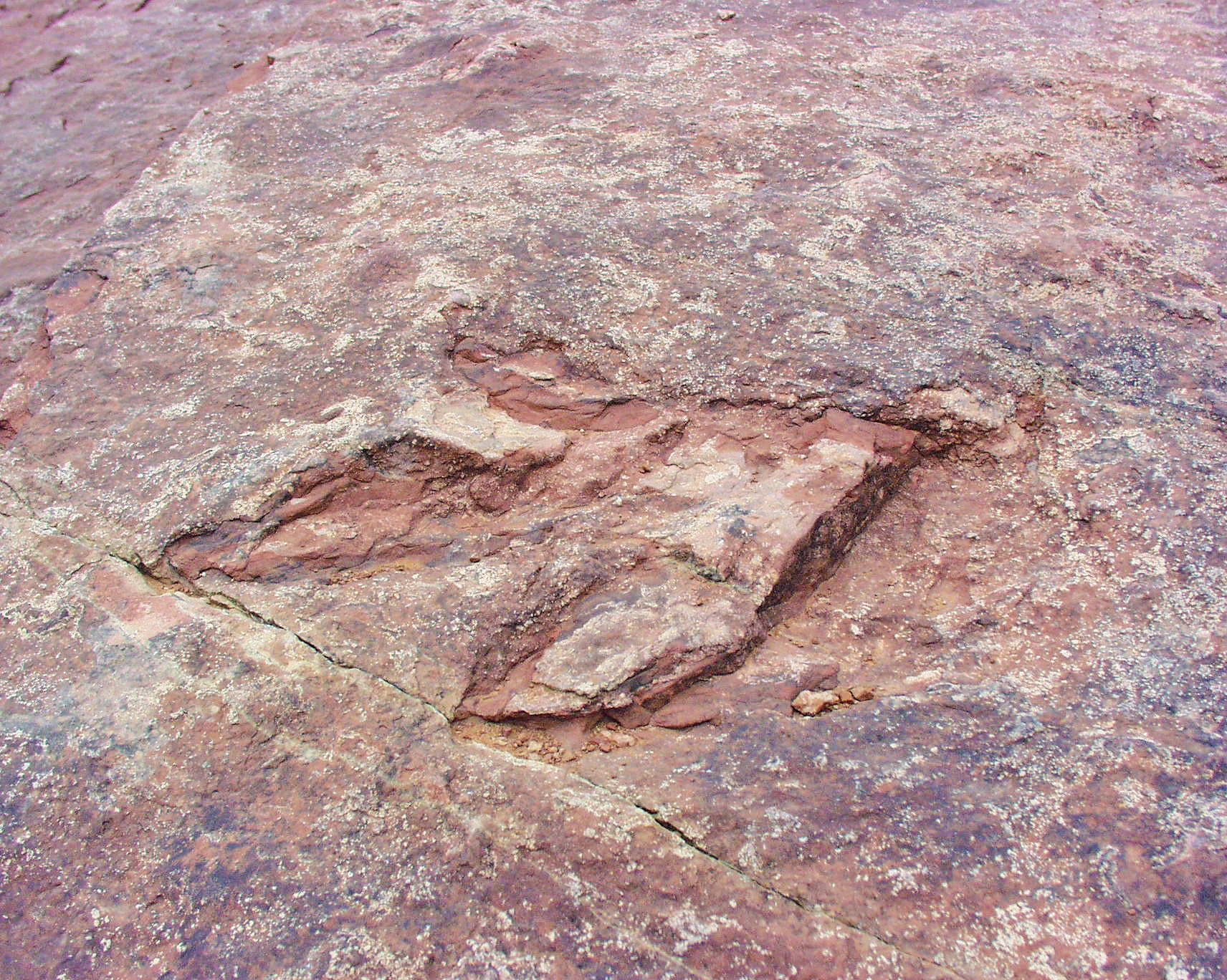 Dinosaur track at Red Fleet State Park