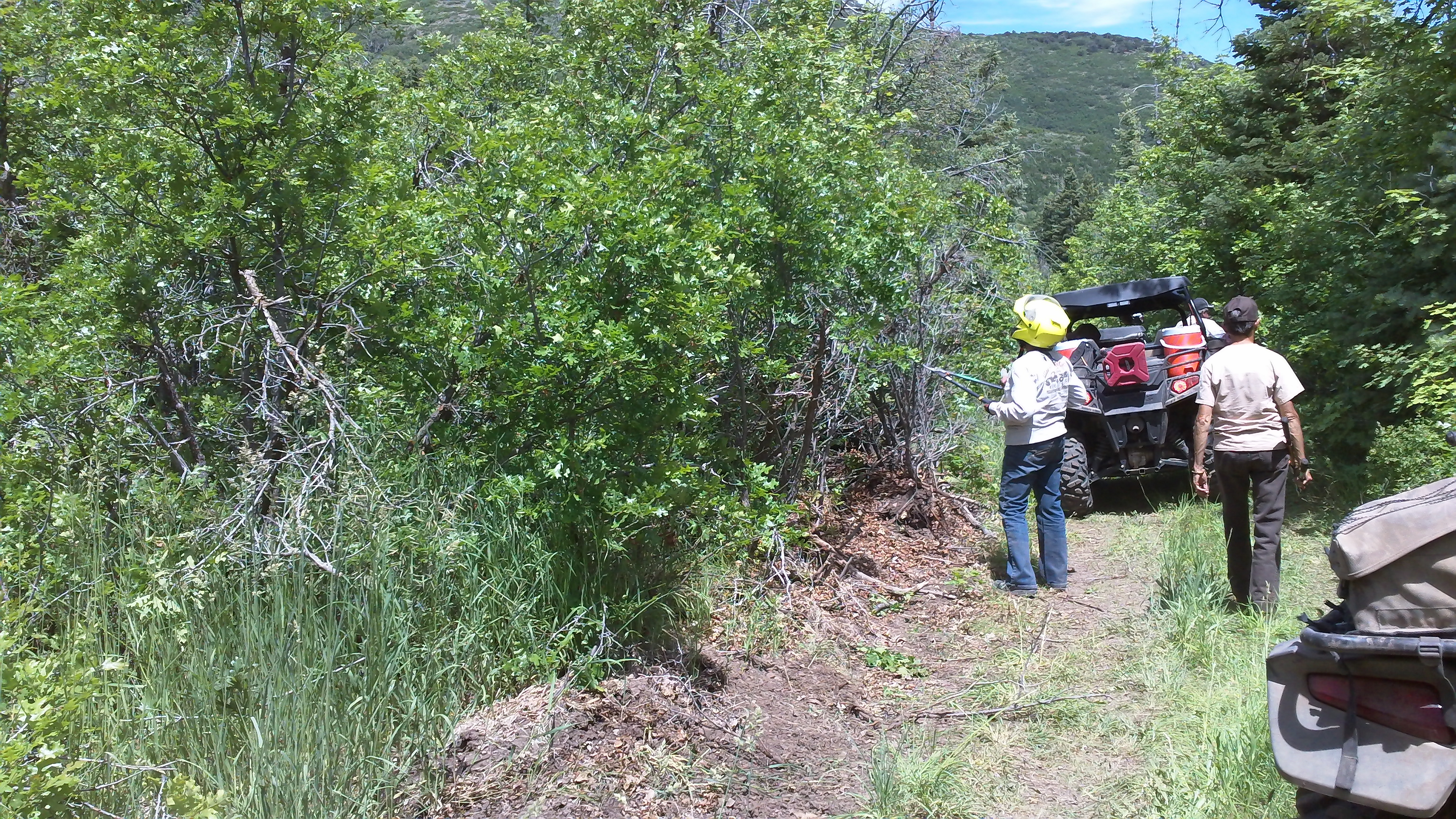 UAA Members pruning along trails